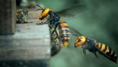 Καλὰ τὰ νέα γιὰ τὶς μέλισσες!!!