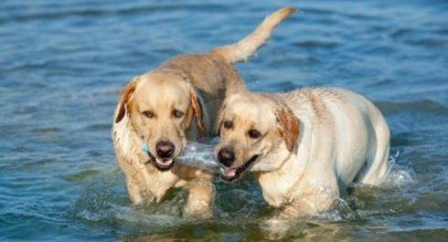 Ἀπαγορεύονται τὰ σκυλιὰ στὶς παραλίες!