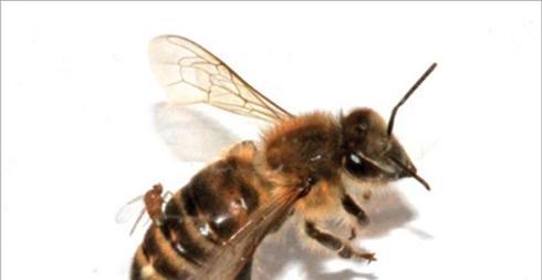 Ἀνάγκη νά ἐξαφανιστοῦν οἱ μέλισσες;