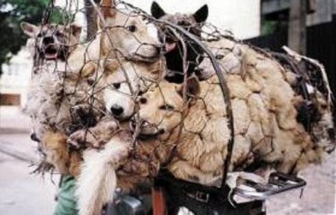 Ἐδῶ τὸ καλὸ κρέας ...σκύλων!!!